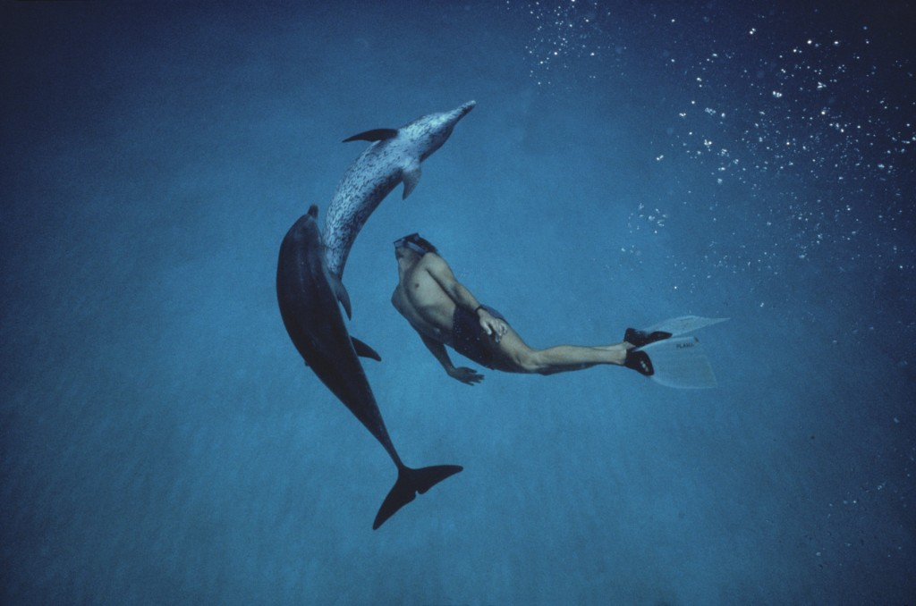 dancing-dolphins-small-Photo-credit-Amos-Nachoum-Handout-1024x678